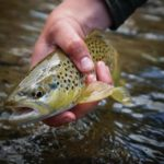 5 Tips for Alberta's Spring Creeks